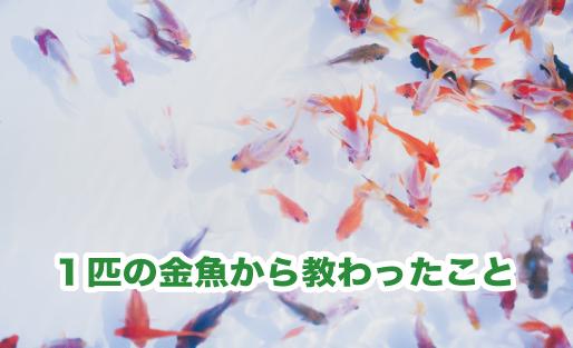 1匹の金魚から教わったこと!金魚の飼い方・寿命・出会いと別れ!